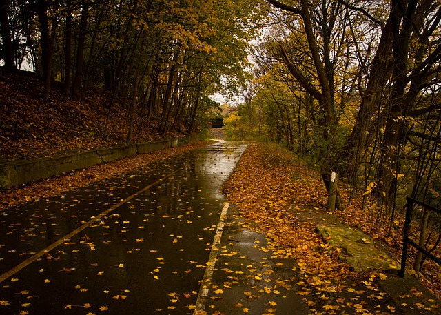 落ち葉の道路